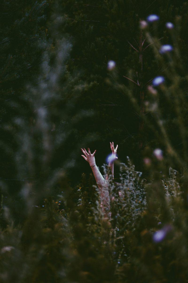 Photography, Margarita Sheremet
