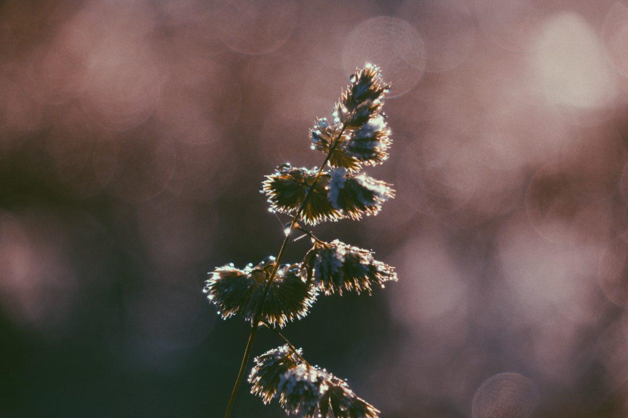 Nature Photography, Margarita Sheremet