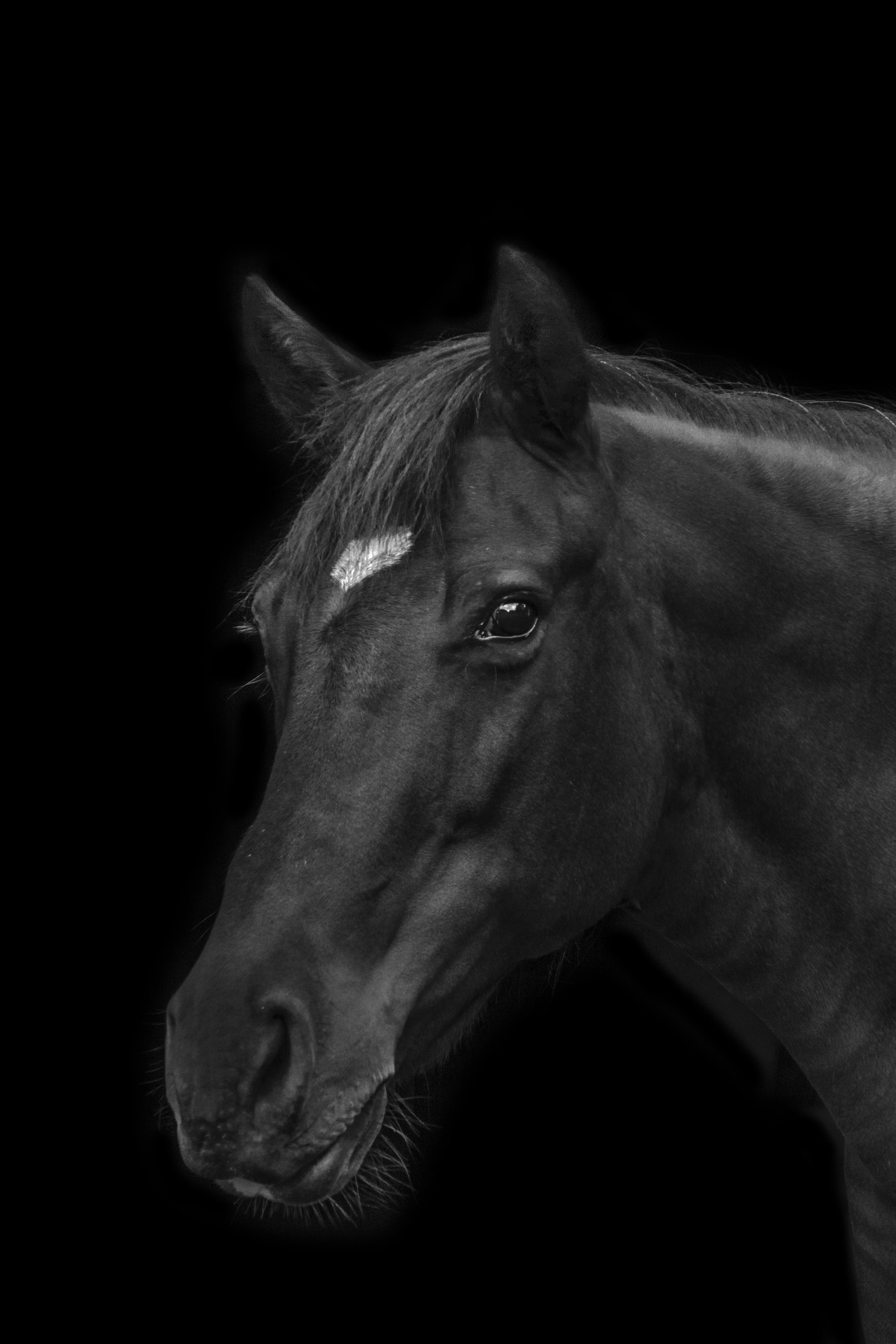 Black and White Photography, Margarita Sheremet
